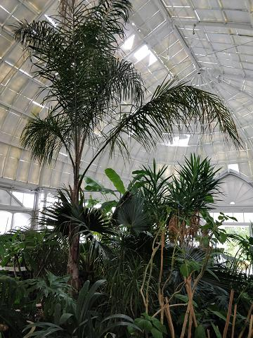 Inside one of the conservatory buildings